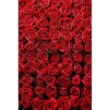 Savage Romantic Roses Printed Vinyl Backdrop - 5x7ft
