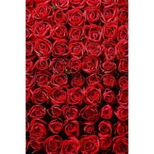 Savage Romantic Roses Printed Vinyl Backdrop - 5x7ft